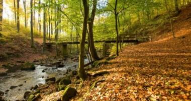Wanderland Westerwald – Westerwald-Steig und Wäller Touren