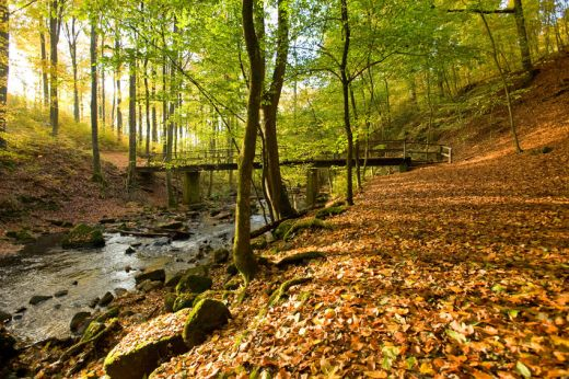 Blick in die Holzbachschlucht - Fotograf / Bildquelle  Dominik Ketz - Copyright  Rheinland-Pfalz Tourismus GmbH