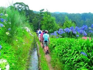Wandern im Westen der Insel Madeira Foto: Wikinger Reisen