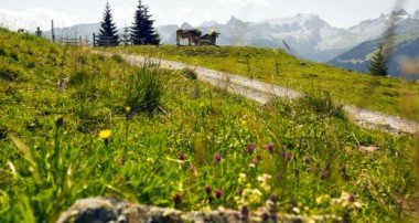 Naturerwachen-Wanderung zur Nova Stoba in der Silvretta Montafon