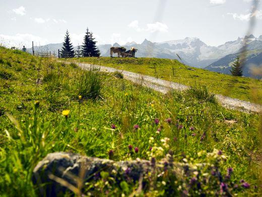 Silvretta Montafon Panoramablick - Foto: Silvretta Montafon
