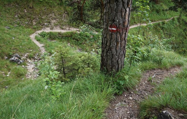 Wandertipp: Panoramarundweg über Zöhreralm & Adlerhorst am Achensee