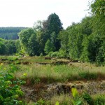 Wanderung im Tal der Feen - Achouffe  021