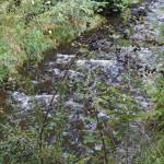 Wanderung im Tal der Feen - Achouffe  025