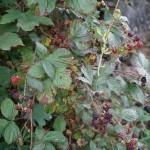 Wanderung im Tal der Feen - Achouffe  028