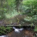 Wanderung im Tal der Feen - Achouffe  032