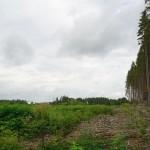 Wanderung im Tal der Feen - Achouffe  045