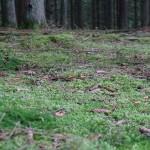 Wanderung im Tal der Feen - Achouffe  050
