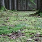 Wanderung im Tal der Feen - Achouffe  051