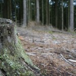 Wanderung im Tal der Feen - Achouffe  064