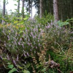 Wanderung im Tal der Feen - Achouffe  067