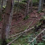 Wanderung im Tal der Feen - Achouffe  070