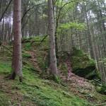 Wanderung im Tal der Feen - Achouffe  071