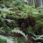 Wanderung im Tal der Feen - Achouffe  072