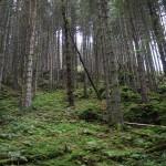Wanderung im Tal der Feen - Achouffe  074