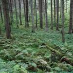 Wanderung im Tal der Feen - Achouffe  075