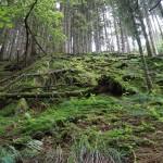 Wanderung im Tal der Feen - Achouffe  081