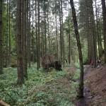 Wanderung im Tal der Feen - Achouffe  082
