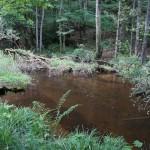 Wanderung im Tal der Feen - Achouffe  085
