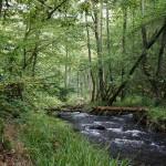 Wanderung im Tal der Feen - Achouffe  089