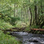 Wanderung im Tal der Feen - Achouffe  090