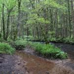 Wanderung im Tal der Feen - Achouffe  093