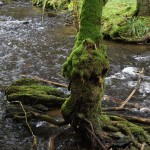 Wanderung im Tal der Feen - Achouffe  095