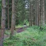 Wanderung im Tal der Feen - Achouffe  104