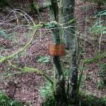 Wanderung im Tal der Feen - Achouffe  105