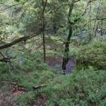 Wanderung im Tal der Feen - Achouffe  107