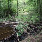Wanderung im Tal der Feen - Achouffe  111